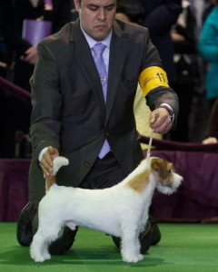 Ronnie_Westminster_2-2013